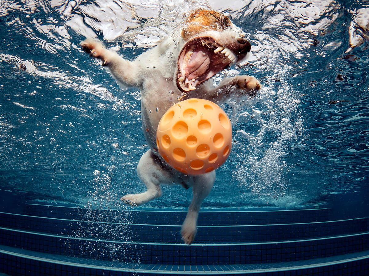 水下世界組02 銀獎 吳穩舟《康妮!球球勒》6849